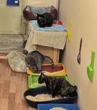 gatos no abrigo Fotografia de Stock