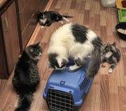 gatos no abrigo Fotos de Stock Royalty Free