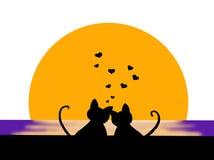 Gatos no amor Imagens de Stock