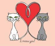 Gatos no amor: Eu mio você foto de stock