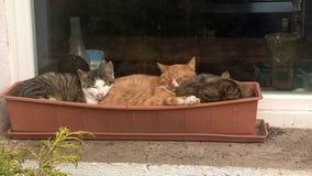 Gatos no potenciômetro de flor fotografia de stock