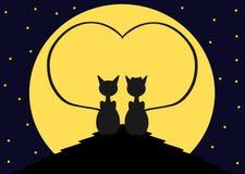 Gatos no telhado Fotos de Stock