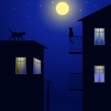 Gatos no telhado Imagens de Stock