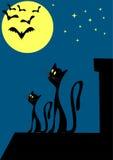 Gatos no telhado Imagem de Stock Royalty Free