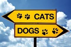 Gatos o perros, enfrente de muestras Imagenes de archivo
