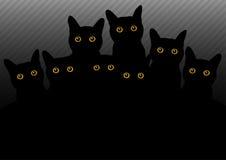 Gatos oscuros Imagenes de archivo