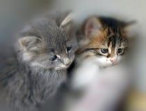 Gatos pequenos foto de stock royalty free