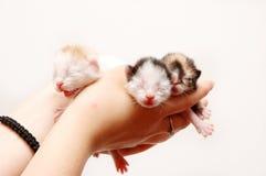 Gatos pequenos Imagem de Stock Royalty Free