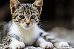 Gatos pequenos bonitos Fotos de Stock Royalty Free