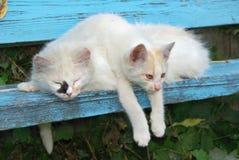 Gatos perdidos. Imágenes de archivo libres de regalías
