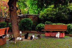 Gatos perdidos en el parque de Estambul Fotografía de archivo