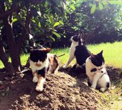 Gatos perdidos que toman el sol en el sol Fotografía de archivo