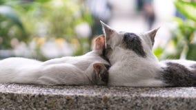 Gatos preciosos de los pares Foto de archivo libre de regalías