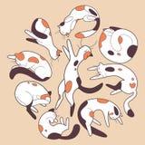 Gatos preguiçosos Foto de Stock