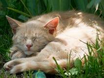 Gatos preguiçosos Fotografia de Stock Royalty Free