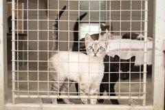 Gatos prendidos em uma libra Fotografia de Stock