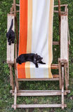 Gatos pretos Fotos de Stock