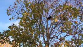 Gatos pretos e alaranjados altos em uma árvore filme