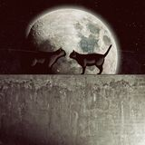 Gatos pretos em um muro de cimento Fotos de Stock Royalty Free