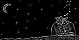 Gatos que cantan en la noche fotos de archivo libres de regalías