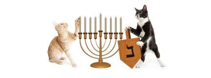 Gatos que comemoram o Hanukkah fotografia de stock