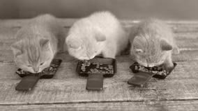 Gatos que comen el alimento para animales de las bandejas almacen de video