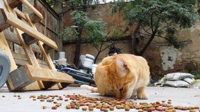 Gatos que comen el gato seco Fooden un patio trasero de una casa abandonada almacen de metraje de vídeo