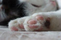 gatos que dormem na cama Foto de Stock Royalty Free