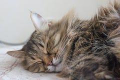 gatos que duermen en cama Foto de archivo libre de regalías