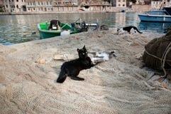 Gatos que jogam em redes de pesca do thr Fotos de Stock