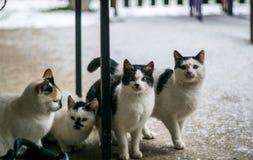 Gatos que permanecen en el piso foto de archivo libre de regalías