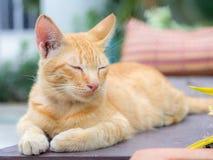 Gatos que relaxam férias Fotografia de Stock
