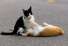 Gatos que toman el pelo con uno a Fotos de archivo libres de regalías