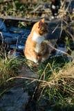 Gatos salvajes en el pueblo Fotografía de archivo libre de regalías