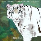 Gatos salvajes Tigre blanco Imagenes de archivo