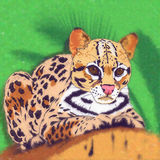 Gatos selvagens jaguar Fotos de Stock Royalty Free