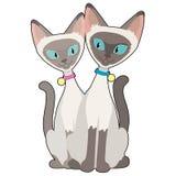 Gatos Siamese Imagens de Stock