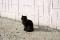 Gatos sin hogar imagenes de archivo