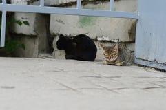 Gatos sin hogar Fotografía de archivo