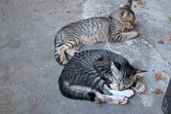 Gatos soñolientos Imágenes de archivo libres de regalías