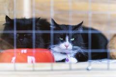 Gatos sozinhos desabrigados tristes com os olhos verdes, olhando para fora da gaiola atrás das barras em um abrigo que espera alg fotos de stock