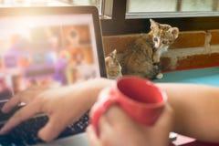 Gatos suaves del bebé de la imagen con el hombre que trabaja en el ordenador portátil y el café de la bebida Imagen de archivo libre de regalías