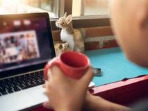 Gatos suaves del bebé de la imagen con el hombre que trabaja en el ordenador portátil y el café de la bebida Foto de archivo libre de regalías