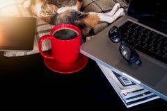 Gatos suaves del bebé del sueño de la imagen y café rojo de la taza con el ordenador portátil Fotos de archivo libres de regalías