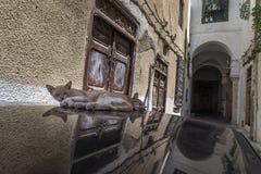 Gatos Tunísia Imagem de Stock Royalty Free