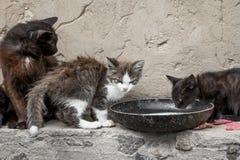 Gatos vagabundos Fotografía de archivo