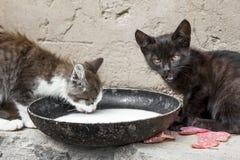 Gatos vagabundos Fotos de archivo