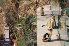 Gatos velhos da cidade de Antalya imagem de stock