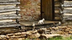 Gatos y cabinas Fotografía de archivo libre de regalías