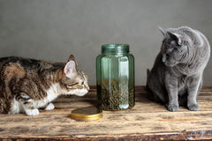 Gatos y Cat Food en vidrio Imagen de archivo